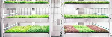 ikiea taste the future with ikea u0027s space10 lokal hydroponic food pop up