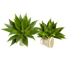 Succulent Plant 17 Inch Indoor Agave Succulent Plant Set Of 2 Unpotted 6109 S2
