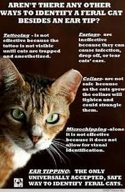 Cat Trap Meme - feral cats tips and resources