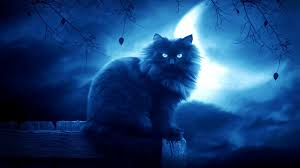 shaggy black cat on moon background wallpapers and images