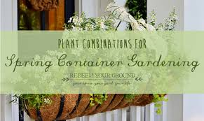 spring container gardening plant combinations redeem your ground