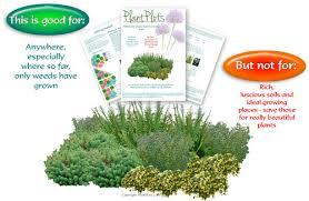 garden border design u2013 plants for deep shade u2013 plantplots