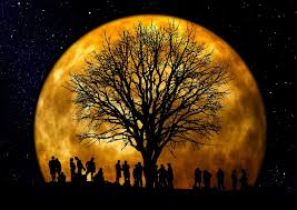 free photo tree kahl moon human free image on pixabay