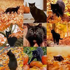 Autumn Memes - autumn black cat cats know your meme