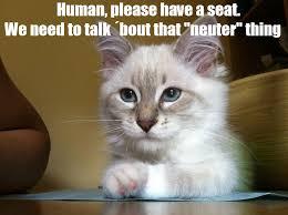 Keyboard Cat Meme - y know what i meme the cat meme frenzy
