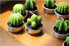 cactus succulent shaped candles on the hunt