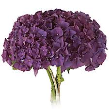 purple hydrangea san diego wholesale flowers florist bouquets purple