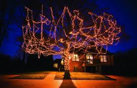 hospice tree of light events to remember loved ones