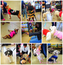 birthday party at unleashed by petco