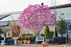 flowering trees larchmont nurseries and construction