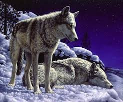 Wolf Curtains Wolf Paintings Fine Art America