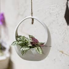 ncyp forest fairy garden miniature stump flower pot treehouse