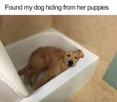 Cute Puppy Memes - 10 of the happiest dog memes ever that will make you smile from