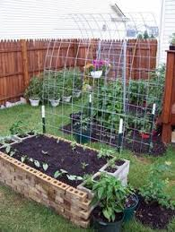 like the look of these over typical trellis for vertical growing