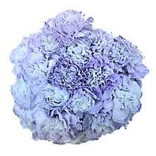 blue carnations carnations sam s club