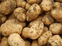 chambre d agriculture savoie les premières pommes de terre du centre chambre d agriculture
