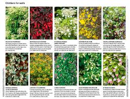 30 of the best climbing plants gardens illustrated
