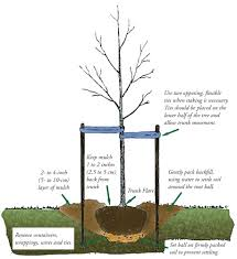 For A Tree Planting A Tree