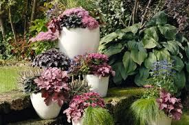 herbstbepflanzung balkon herbstbepflanzung für töpfe und kübel mein schöner garten