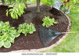 How To Mulch Flower Beds Mulch Stock Images Royalty Free Images U0026 Vectors Shutterstock