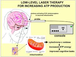 the nuts and bolts of low level laser light therapy treating cognitive impairment with transcranial low level laser