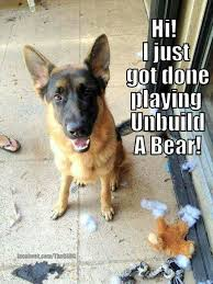 Funny German Shepherd Memes - funny german shepherd thinking funny german shepherd dogs