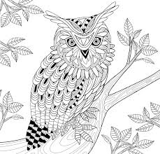 amazon com owl town coloring book 31 stress relieving