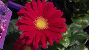 flowers big red flower white purple flowers pink roses flowe full