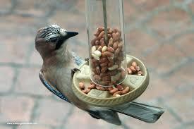 different kinds of bird feeder feeder apple high perch hummingbird