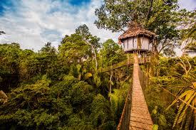 three house treehouse lodge peru rainforest cruises