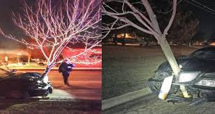 forgive gallagher drives around town with 15 foot tree