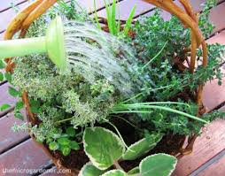 Herb Container Garden - 17 water saving tips for container gardens the micro gardener
