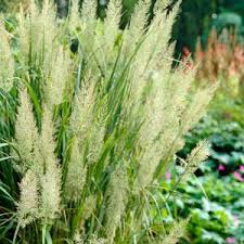 buy garden plants from garden centre gardening express the