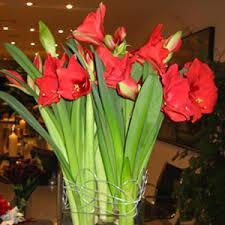 Christmas Flowers Bbrooks Fine Flowers Unique Christmas Flowers Flower Delivery
