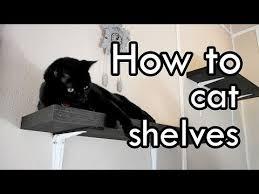 Wall Shelves For Cats Best 25 Cat Wall Shelves Ideas On Pinterest Diy Cat Shelves
