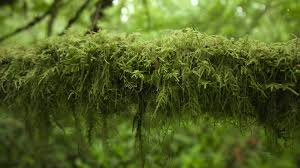 Moss Free Photo Moss Forest Green Trails Bark Free Image On