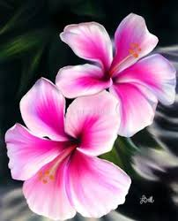 hawaii s state flower is the hawaiian hibiscus description from