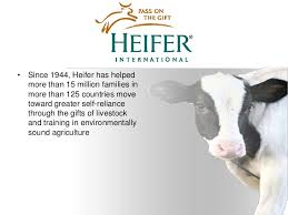 heifer international high value audiences help feed millions for heifer international