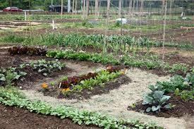 soil for vegetable garden gardening ideas