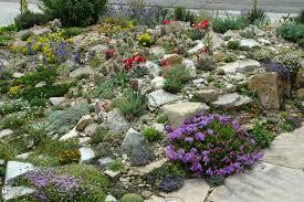 Desert Rock Garden Ideas Front Yard Paintbrush Gardens Llc Crevice Shocking Rock Garden