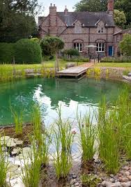 natural swimming ponds should you build one in your garden