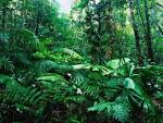 ชนิดของป่าไม้ ประเภทของป่าไม้ ทำไมป่าไม้จึงแตกต่างกันทั่วโลก ป่า