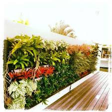 South Florida Landscaping Ideas 39 Best South Florida Landscaping Images On Pinterest Florida