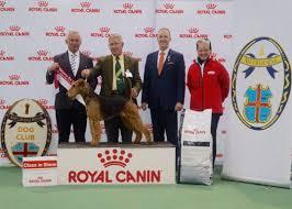 belgian shepherd victoria australia dog shows events u0026 photos royal canin breeders portal