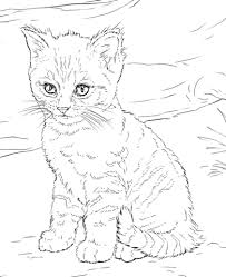 printable coloring pages kittens cute kitten coloring page free printable coloring pages