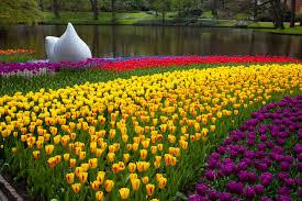 keukenhof flower gardens floral feast at keukenhof gardens netherlands motorhome full time