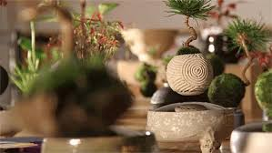 Table Centerpieces Stunning Table Centerpiece Ideas Floating In The Air Bonsai Trees