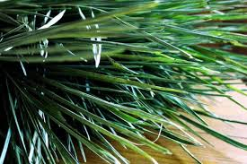 palm branches for palm sunday lent quiz what is the symbolism of palm branches the united