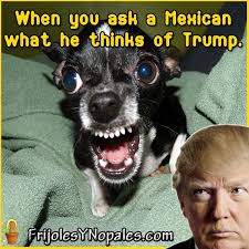 Mexican Meme Jokes - hilarious trump memes and jokes funny gallery ebaum s world