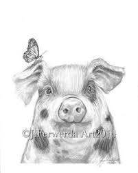 cute pig pencil drawing google search my piggies pinterest